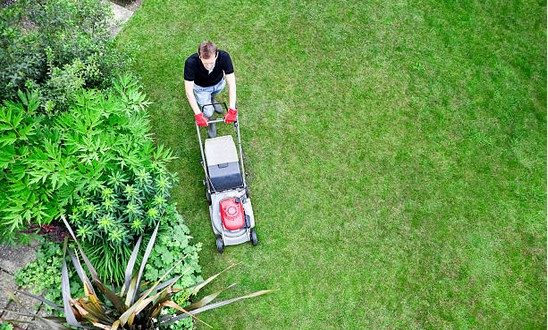summer lawn care | Greg's Small Engine